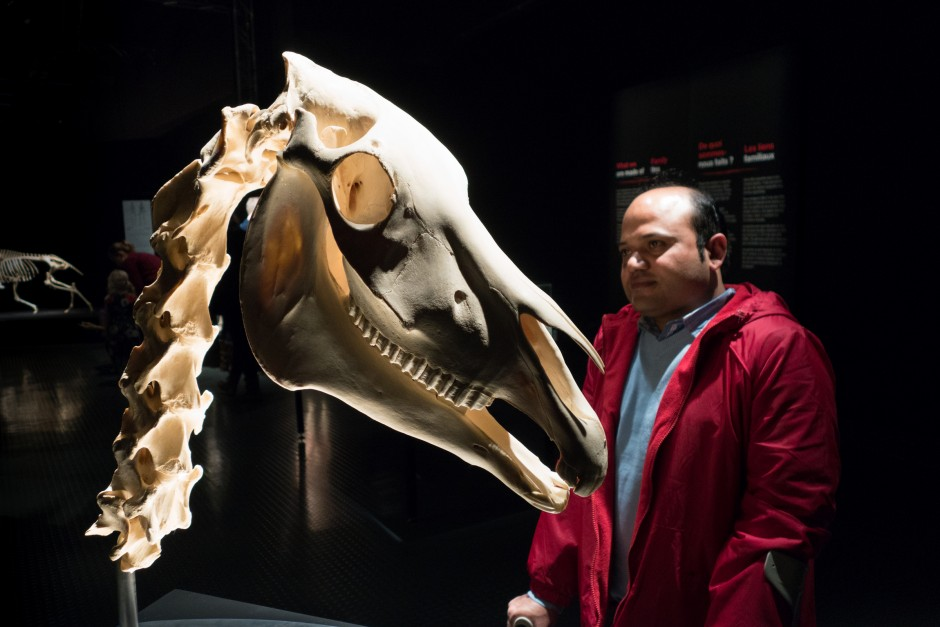"""The """"Animals Inside Out"""" exhibition at Science World in Vancouver"""